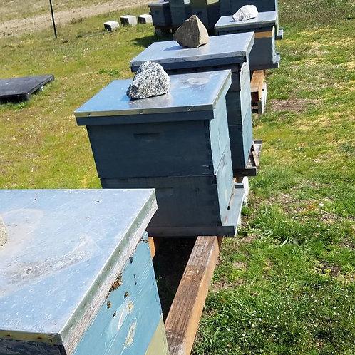 1:1 Hive Class