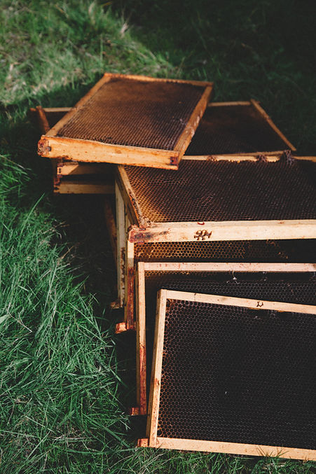 Beekeeping frames laying on the grass.