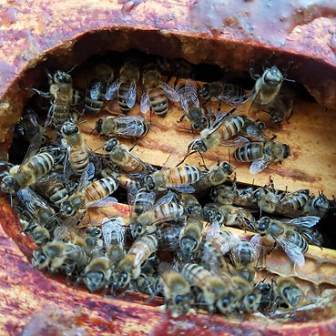 Close up of bees.