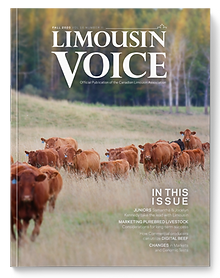 limo_voice_cover_fall2020.png