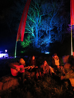 50/50 Fest Tree Uplighting
