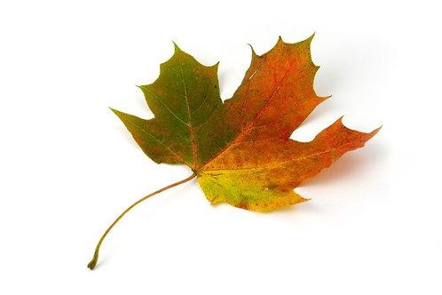 Maple (Dark Balsamic)