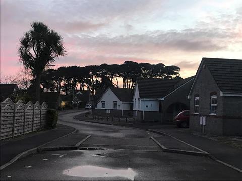 Fir Trees at Parc an Gonwyn 07.44am, 1 December 2020