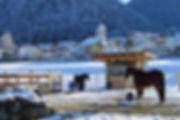 Reitstall Grinzens, Reitstall Tirol, Aktivstall Grinzens, Aktivstall Tirol, Broslerhof Grinzens, Broslerhof Tirol, Therapiestall Grinzens, Therapiestall Tirol
