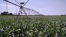 Corn pivot.jpg