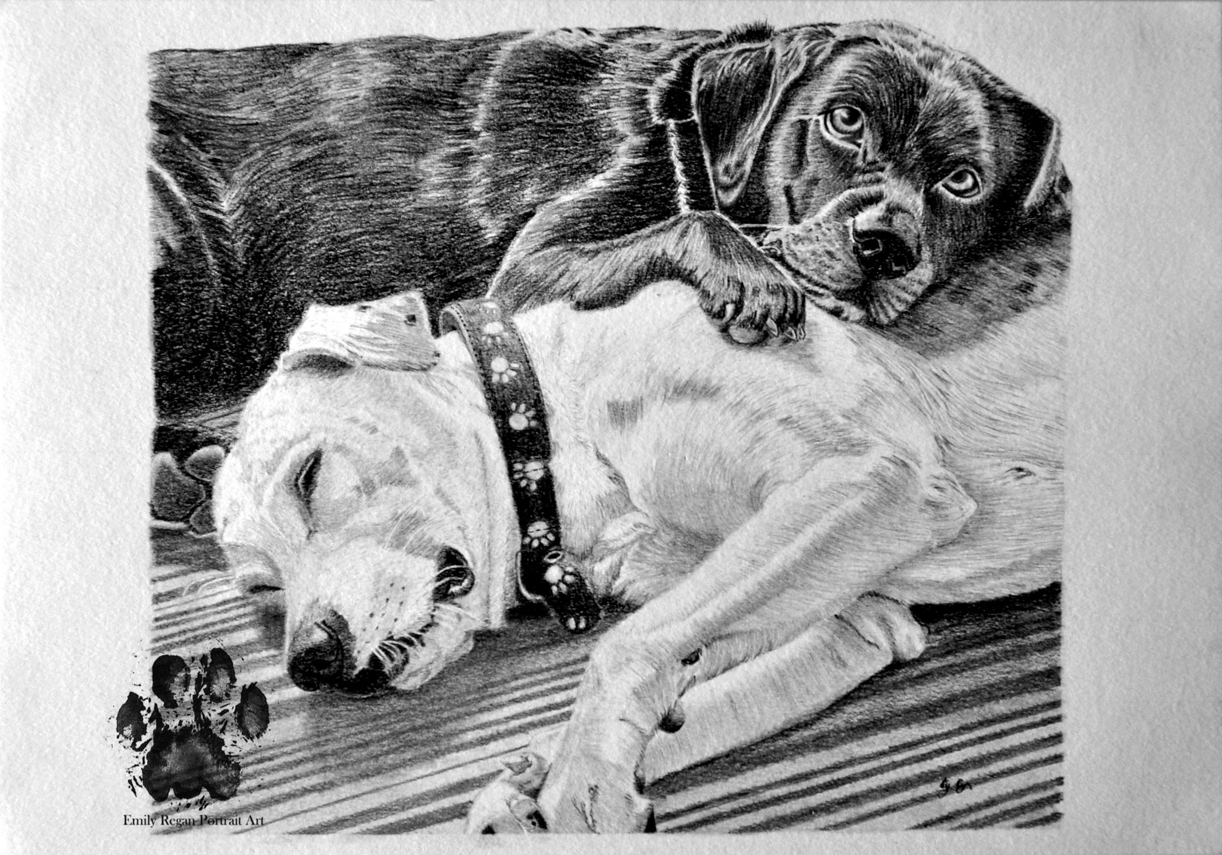 Marley & Lola Graphite
