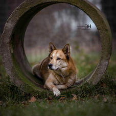 Yukon by Christian Herzog Photography