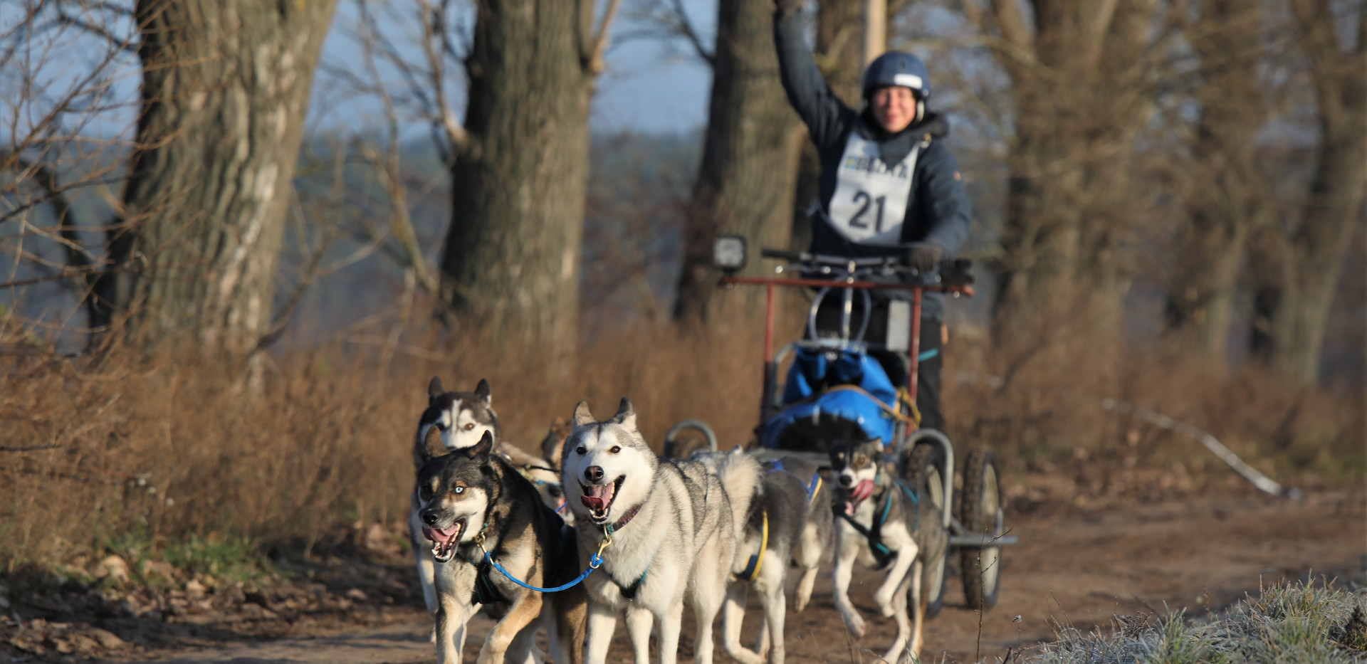 dog-paparazzi_Dog Paparazzi - Klaistow 2