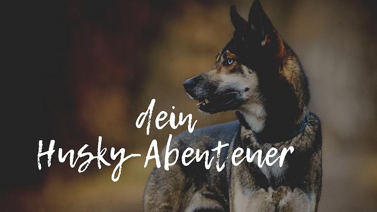 dein Husky-Abenteuer.png