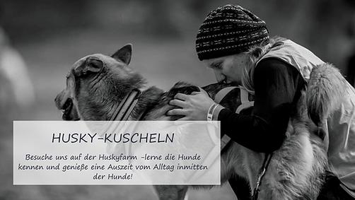 husky kuscheln.png