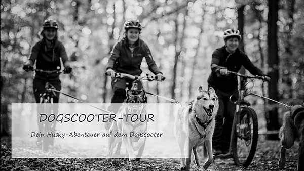 scootertour.png