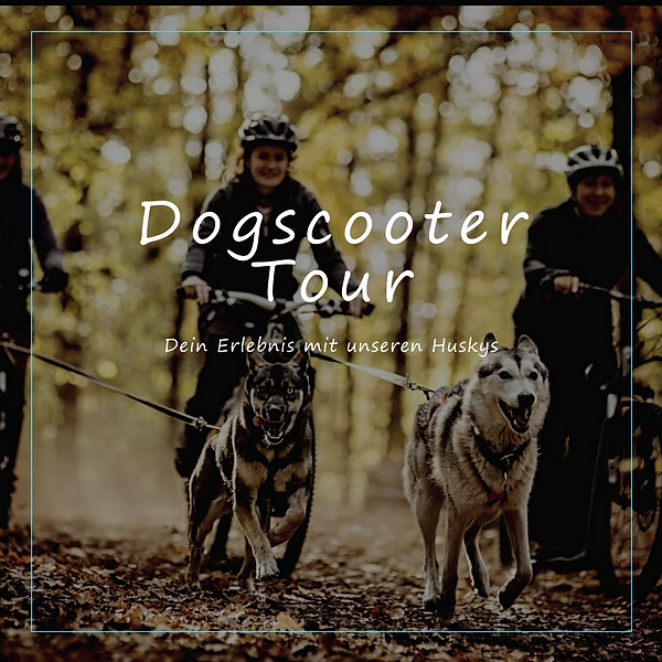 Dogscooter Tour.png