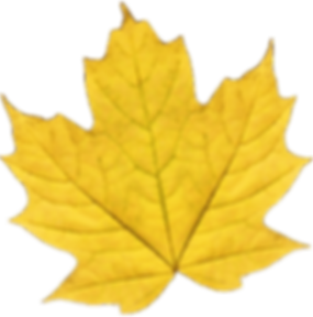 leaf 2_edited.png