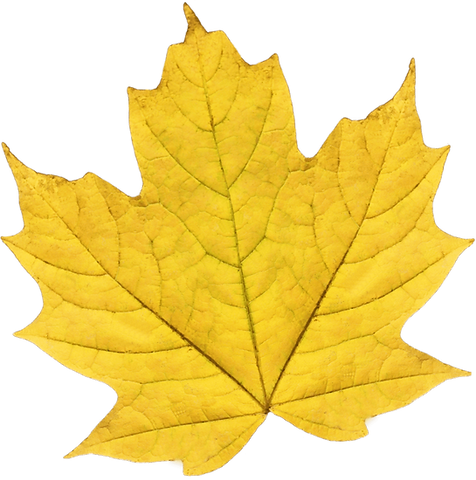leaf 2_edited.png