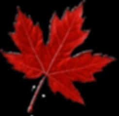 leaf 3.png