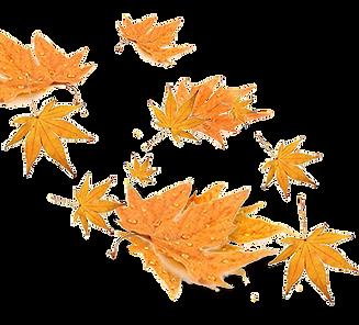leaf 4_edited.png