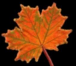 leaf 1.png