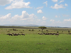 Book kenya safari holiday tour package best offer on Masai Mara short break safari