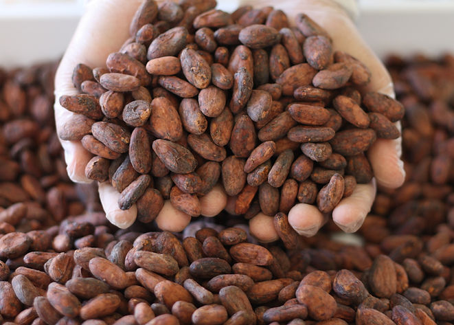 Cacao Aurea Tradings El Salvador VAICACA