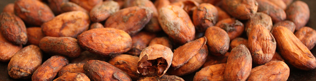 FAVE DI CACAO/CACAO BEANS