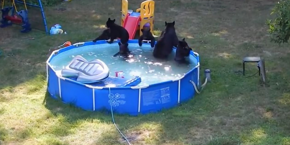 TBB Members Only Pool Party
