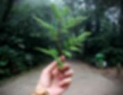 MIROLOG - Semana do Meio Ambiente .png