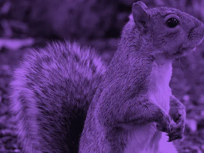 Purple Squirrels and Your Product Team