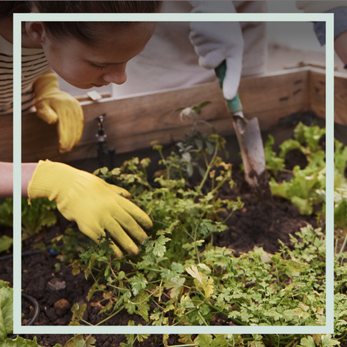 Ist Kompost = Kompost? 5 Fakten, die du über Kompost und Home Composting wissen solltest