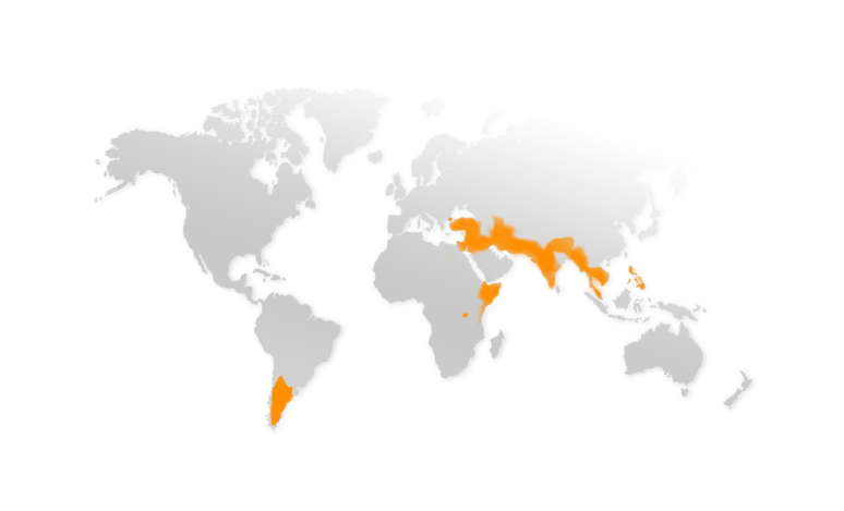 WeltkarteNeu.png