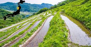 Japão de Norte a Sul: uma viagem através dos saquês - NIIGATA