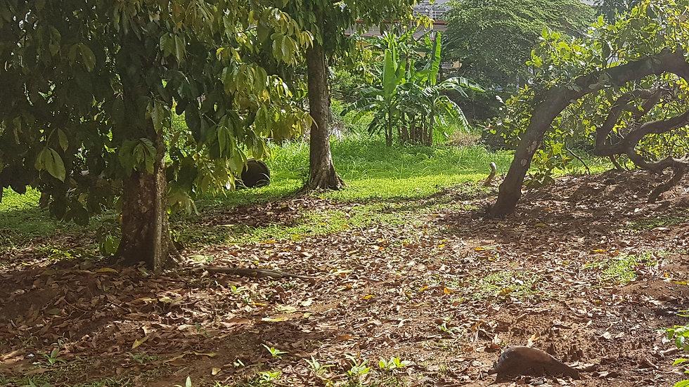 Terreno Comercial-Residencial en Villa Zaita