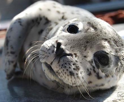marine-mammal-care-center-pup.jpg
