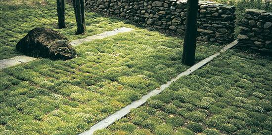 Wagner-Hodgson-Hilltop-Moss-and-Wall.jpg