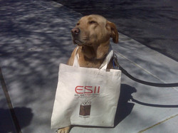 ESII Dog and Tote