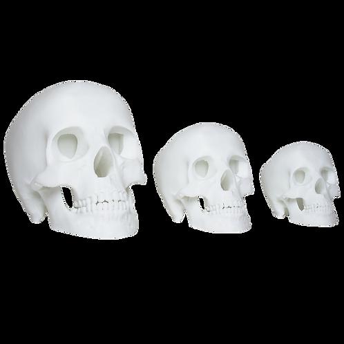 Skulls   set of 3