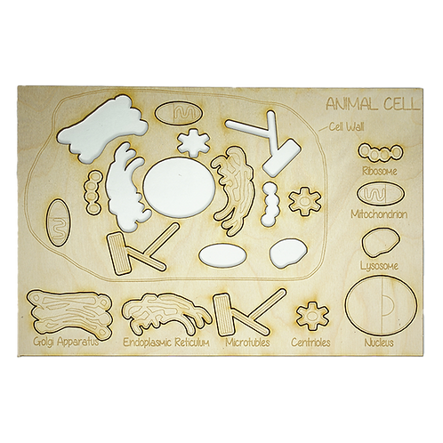 Animal Cell Puzzle