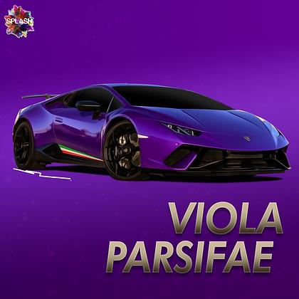 Viola Parsifae
