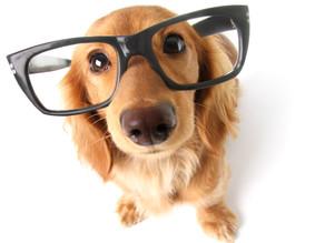 Aprenda a fazer o 'repelente de xixi' para educar o seu cachorro