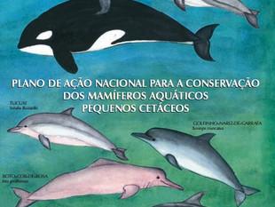 Você conhece os pequenos cetáceos?