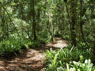 Autorizado repasse de multa ambiental para construção de centro de referência em florestas na região