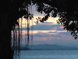 """Curta Babitonga! """"Árvore da vida"""" mostra o desenrolar da vida na baía pelo olhar das figue"""
