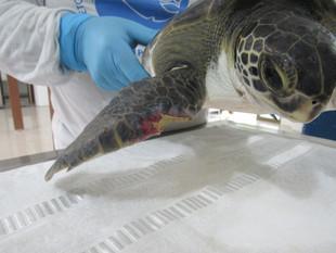 Univille e PMP-BS inauguram unidade de estabilização de fauna marinha em São Francisco do Sul