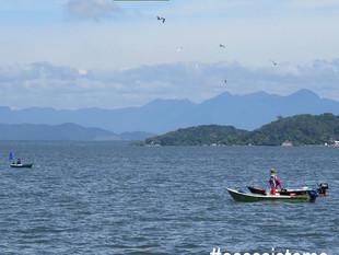 Você sabia que há quase 30 comunidades de pescadores na região do Ecossistema Babitonga?