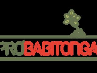 Grupo Pró-Babitonga inicia reuniões remotas neste mês de junho