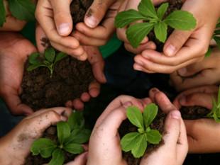 Prefeitura de São Francisco do Sul abre edital para seleção de propostas em educação ambiental