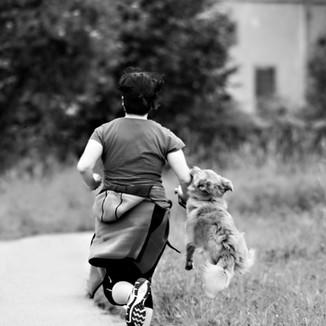 Run_dog.jpg