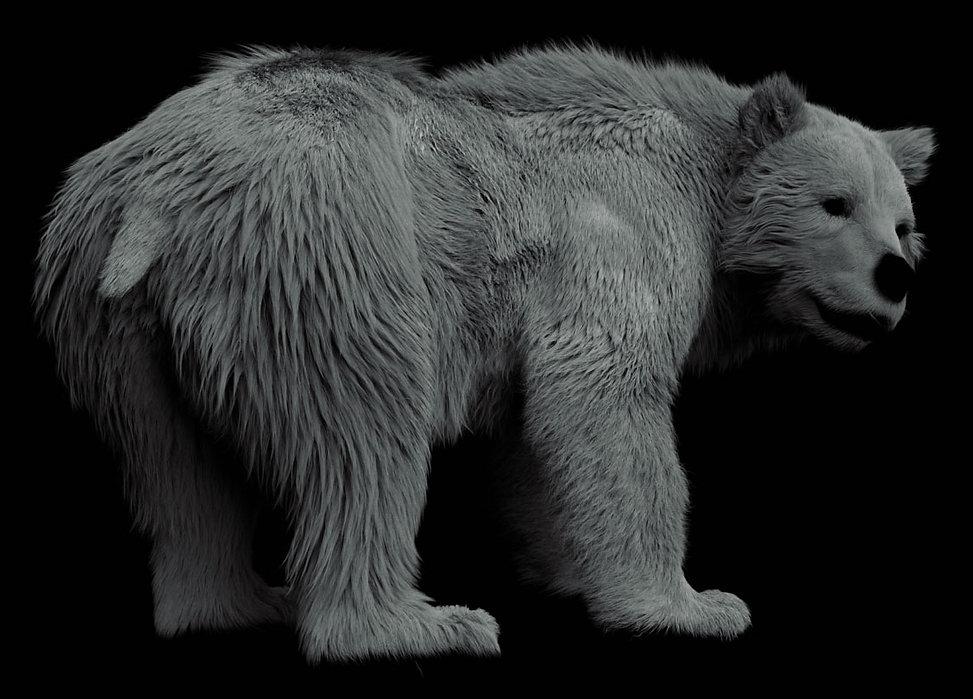 Bear_05.jpg