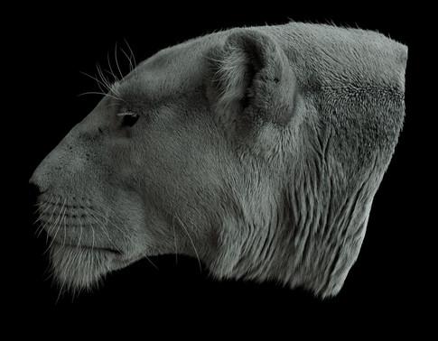 Lioness_side_02.jpg