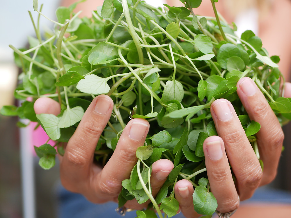A handful of watercress