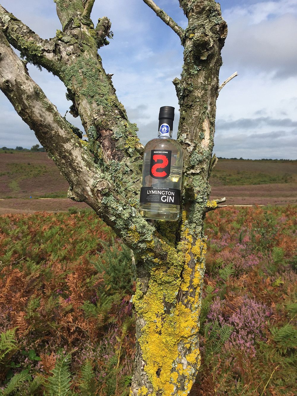 Dancing Cows gin In the New Forest